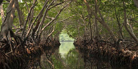 Family Fun from Fairchild: Mangrove Mania ONLINE tickets