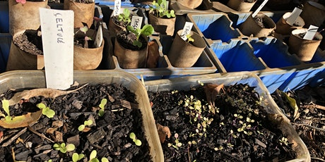 Growing Veges from Seeds tickets