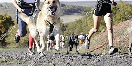 Red Warrior Maze Runner - Canicross Race tickets
