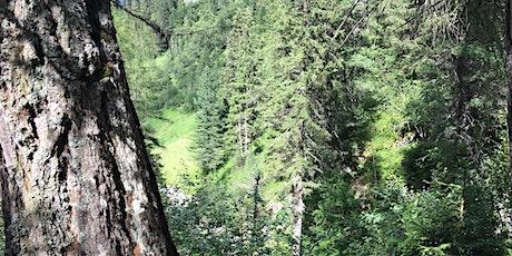Waldcamp - Waldbaden und im Wald übernachten Tickets