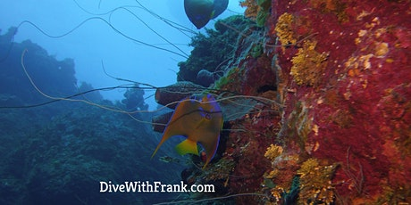 Project AWARE Coral Reef Conservation - ONLINE with DWF tickets