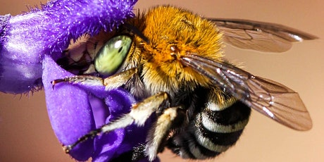 Bountiful Beautiful Bees - Creating bee friendly gardens workshop tickets