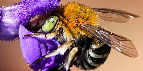 Bountiful Beautiful Bees - Creating bee friendly gardens workshop Tickets