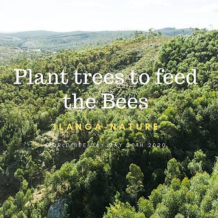 Celebrate World bee Day with Ilanga-Nature Madagascan Honey image