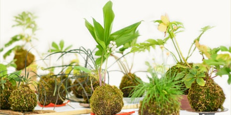Kokedama & Cocktails— A Virtual DIY Class! tickets
