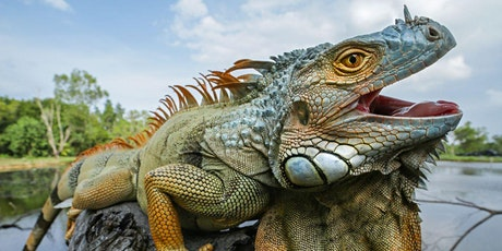 Save the Endangered Iguanas tickets