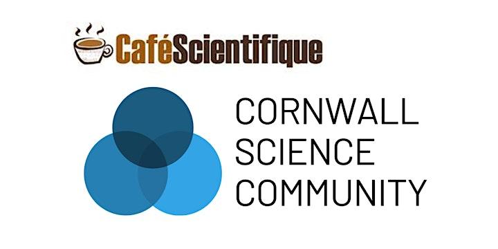 Virtual Café Sci   Dr. Beth Roberts   Bees image