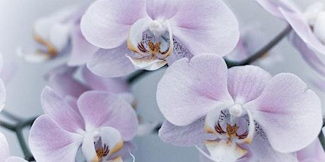 Contact met overledenen (bloemenseance) - Groot-Bijgaarden tickets