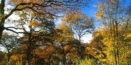 Guided walk to see autumn colours and fungi tickets
