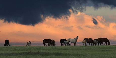 On the Road - Exploring the Natural Wonders of Southern Alberta tickets