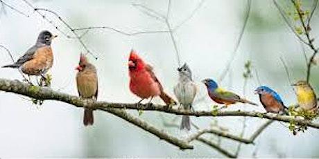 Songbirds Facebook Livestream tickets