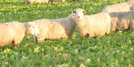 Grazing Cover Crops with Sheep - Virtual Workshop tickets
