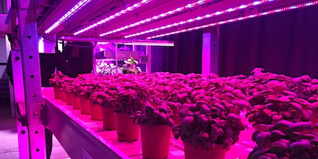 Resource Use Efficiency in Urban Agriculture webinar tickets