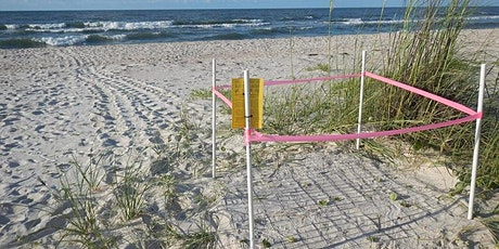 Sea Turtle Adopt-a-Nest 2020 tickets