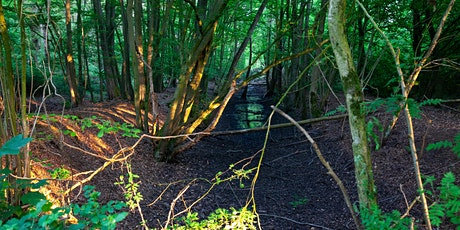 Late Spring Forest Bathing tickets