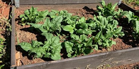 Home Vegetable Gardening 101 tickets