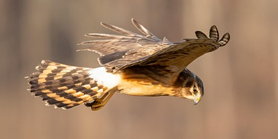 VIRTUAL CLASS - Confessions of a Wildlife Photogra