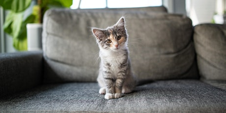 Virtual Foster Orientation for May tickets