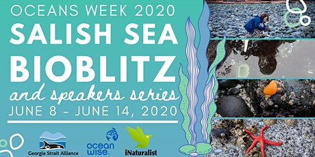Salish Sea BioBlitz entradas