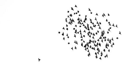 Webinar: Agile Führung, Innovation und Selbstorganisation Tickets