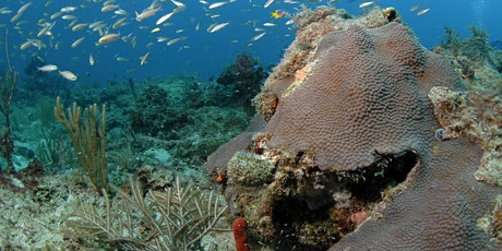 UF and DEP Coral Reef Program Stakeholder Engagement Project Public Meeting tickets