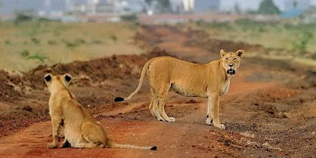 Nairobi National Park 1 DAY GAME Drive Experience @ KSH 3 600 tickets