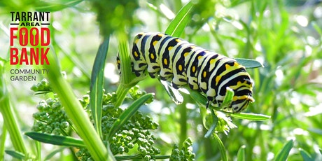Virtual Garden Workshop - Good Bugs and Bad Bugs in the Garden tickets