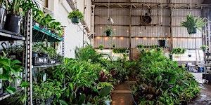 Canberra Pop-up shop - Huge Indoor Plant sale