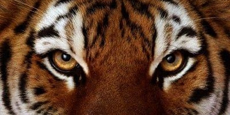 Journey with Tiger and Zebra Shamanic Guides - Move Through Times of Change tickets