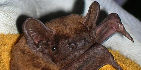 Ecology of Bats (British & Irish Species) - An Overview tickets