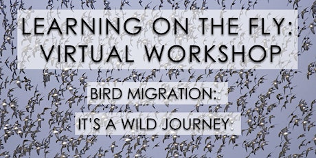 Learning on the Fly: Virtual Workshop, Bird Migration: It's a Wild Journey! tickets