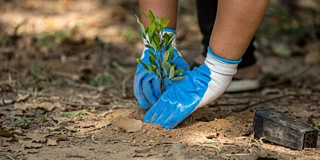 NaturallyGC Tallebudgera Creek Tree Planting tickets