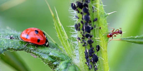 Biorational Pesticides:  Eco-Friendly Alternatives for Controlling Pests (webinar) tickets