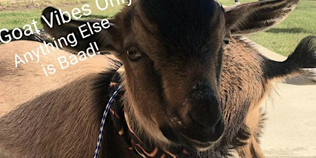 Virtual Baby Goats and Wellness Event tickets