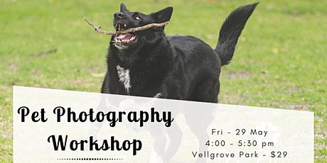 Pet Photography Workshop using Aperture & Shutter Priority Modes tickets