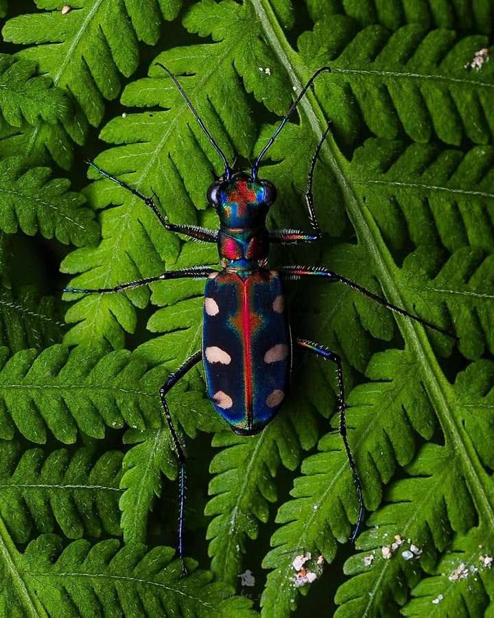 The beauty of HK insects image