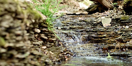 Ch. 2 - Evaluating Stream Health | Stream Health & Stormwater biglietti