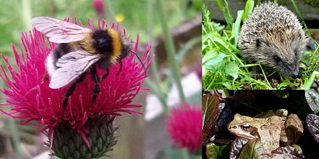 Gardening for Wildlife -  Live Chat and Advice tickets