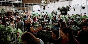Melbourne Virtual Pop-up shop - Huge Indoor Plant sale