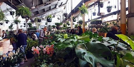 Brisbane & Surrounds Pop-up shop - Huge Indoor Plant sale tickets