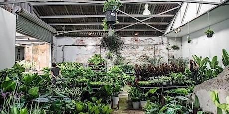 Newcastle Virtual Pop-up shop - Huge Indoor Plant sale tickets
