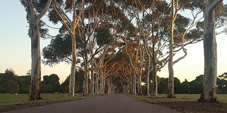Guided Walk through Golden Wattle Park / Mirnu Wirra (Park 21W) tickets