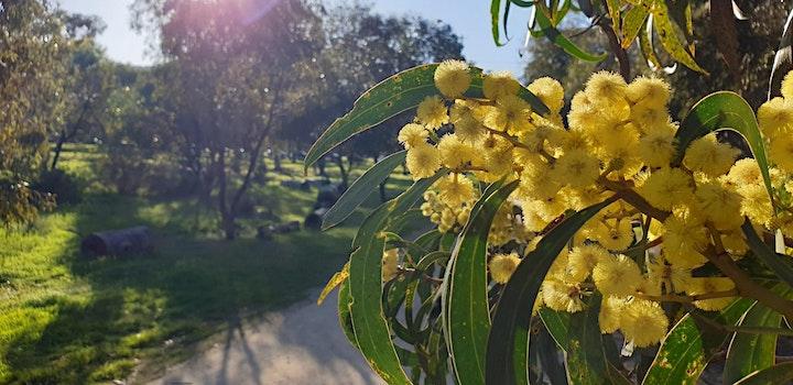 Guided Walk through Golden Wattle Park / Mirnu Wirra (Park 21W) image
