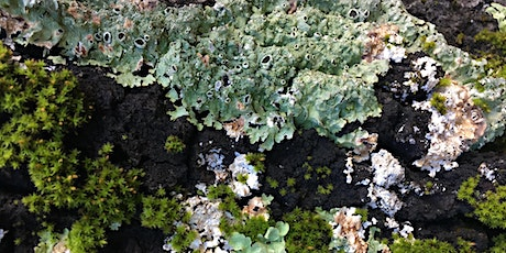 Webinar: Maintaining California Lichen Diversity in an Era of Global Change tickets