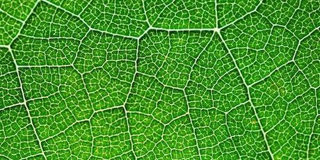 BP-ICAM Webinar: Nature-Inspired Engineering of Multifunctional Materials tickets
