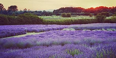 Jardin du Soleil Lavender Festival tickets
