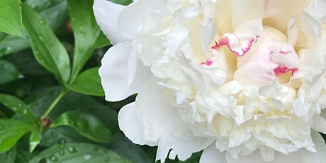 Paint the Peonies at Schweikher House tickets