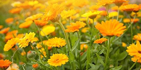 Distribution de fleurs - Arr. CDN-NDG - Secteur CDN - 30 et 31 mai 2020 billets