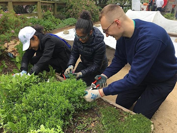 Garden Volunteer Shifts image