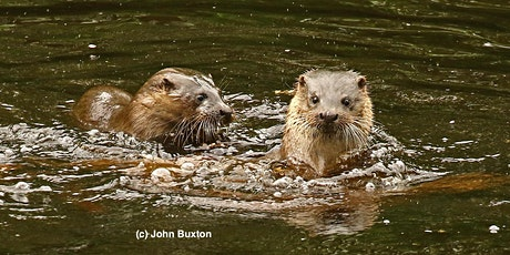 Return of the Otter: tracking otter recovery in north east England tickets